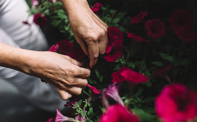 Kädet kukkapenkissä.